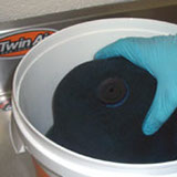 Soaking Twin Air Filter in Twin Air Cleaning Tub